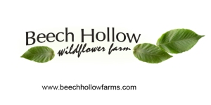 beech Hollow logowebsite
